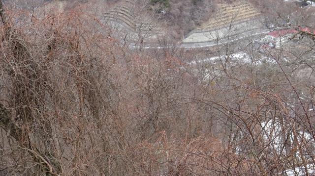 かずら橋の材料のサルナシが多い