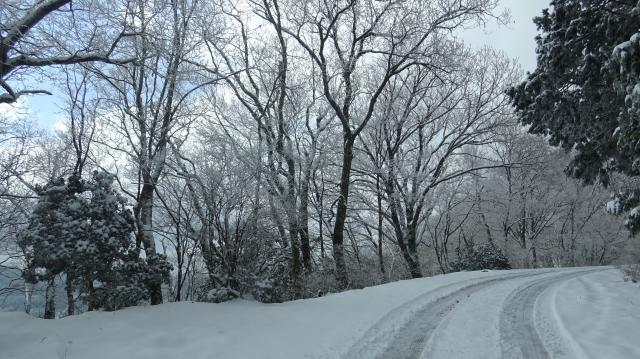 高越寺へ向かう林道