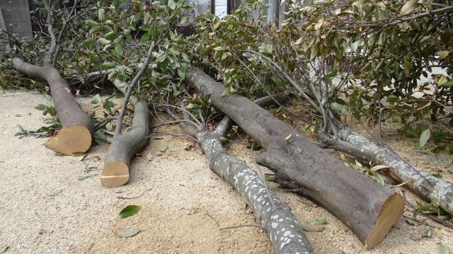 原木の伐採