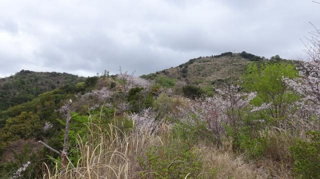 島の中の里山