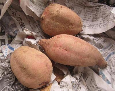 種サツマイモ保管 (5)
