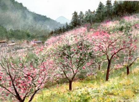 WEb福寿草と紅梅