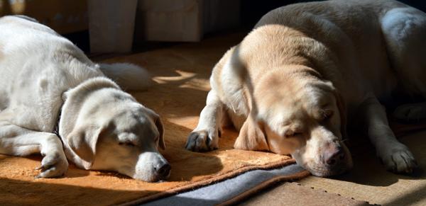 仲良くお昼寝。