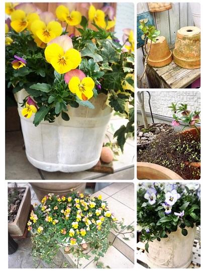 2016春3月の庭