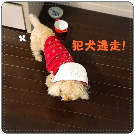 20160219 3犯犬