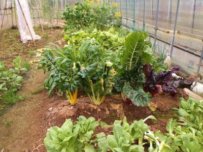 2.20ハウスの野菜