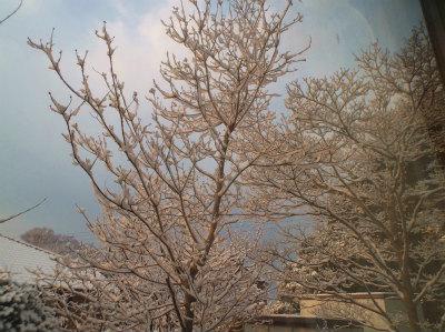2.26雪景色
