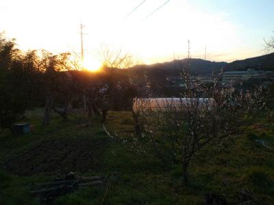 3.15夕暮れの畑