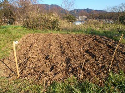 3.27ジャガイモ植え4
