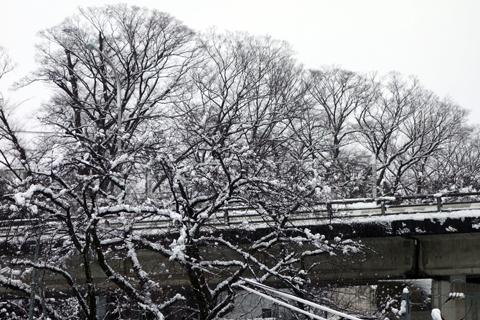 silver_snow_3.jpg