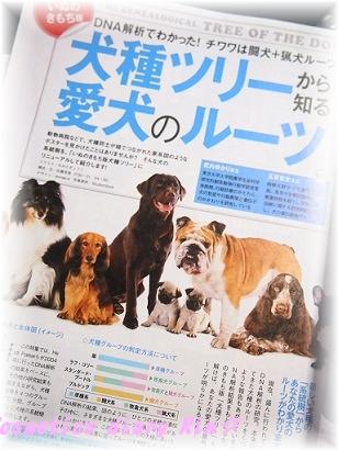 犬種のルーツ