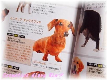 猟犬&闘犬