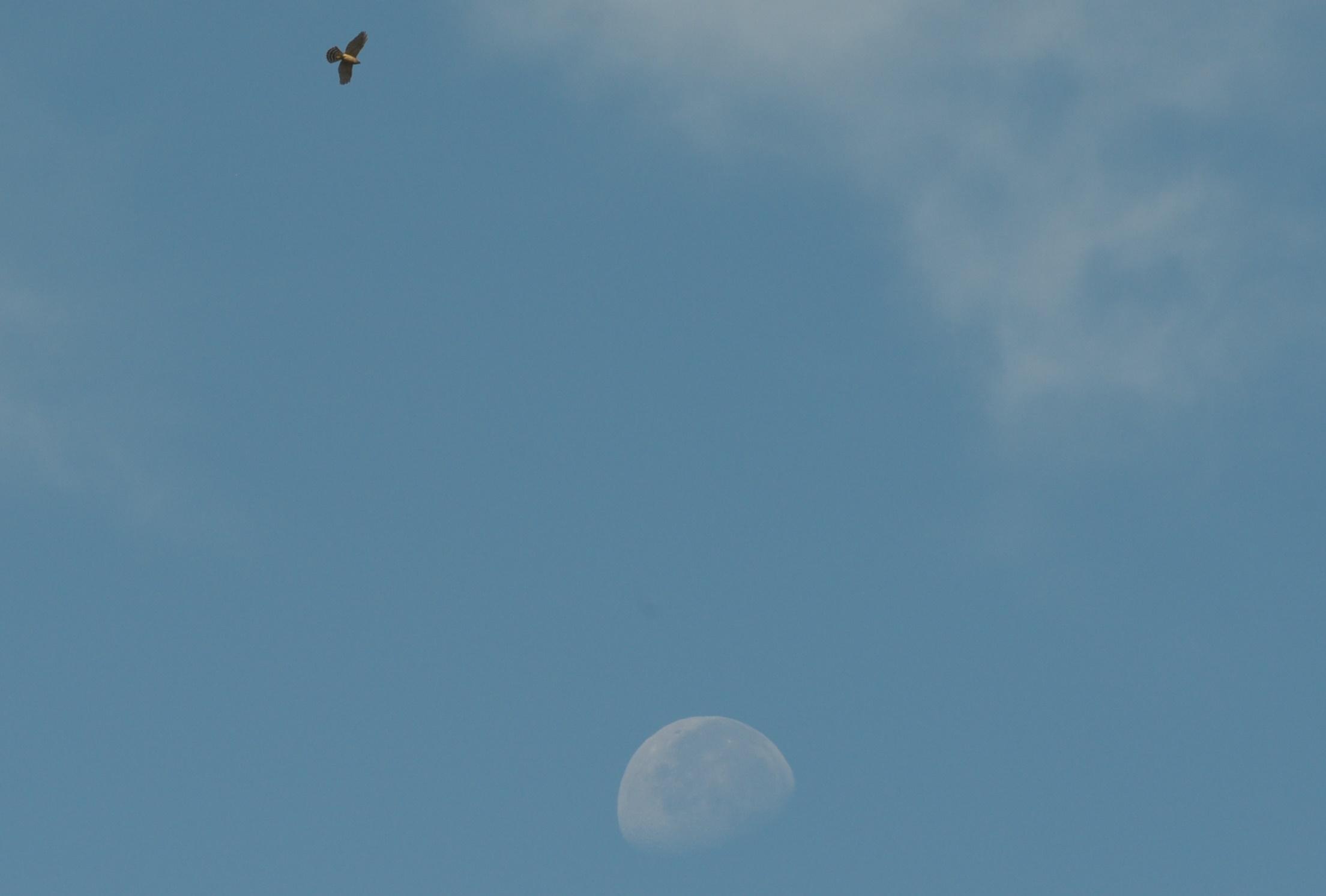 2011-09-18_0461.jpg