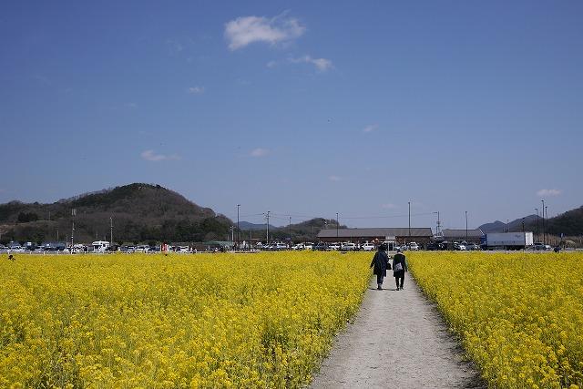 s-12:03菜の花畑