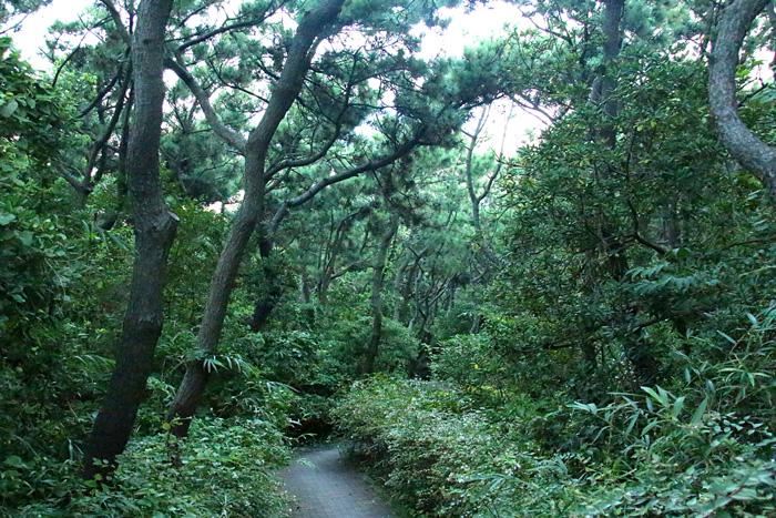 scenery150814_09.jpg