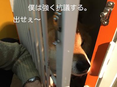 IMG_5597 のコピー