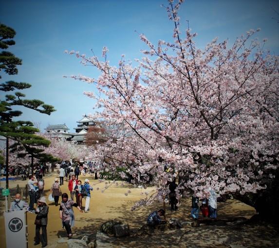 松山城春2016