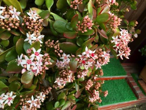 plants_001p02.jpg