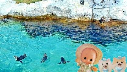 夏は水族館に