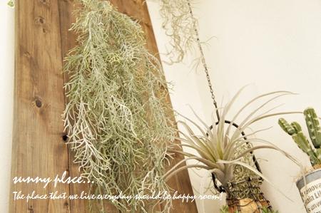 spa bush2 blog