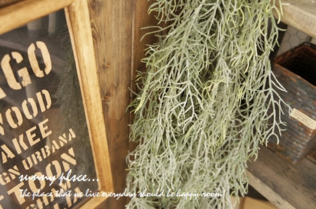 spa bush1 blog
