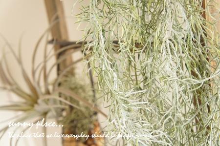 spa bush8 blog