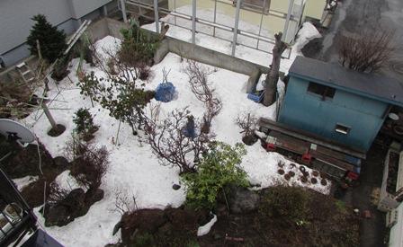お庭の雪も