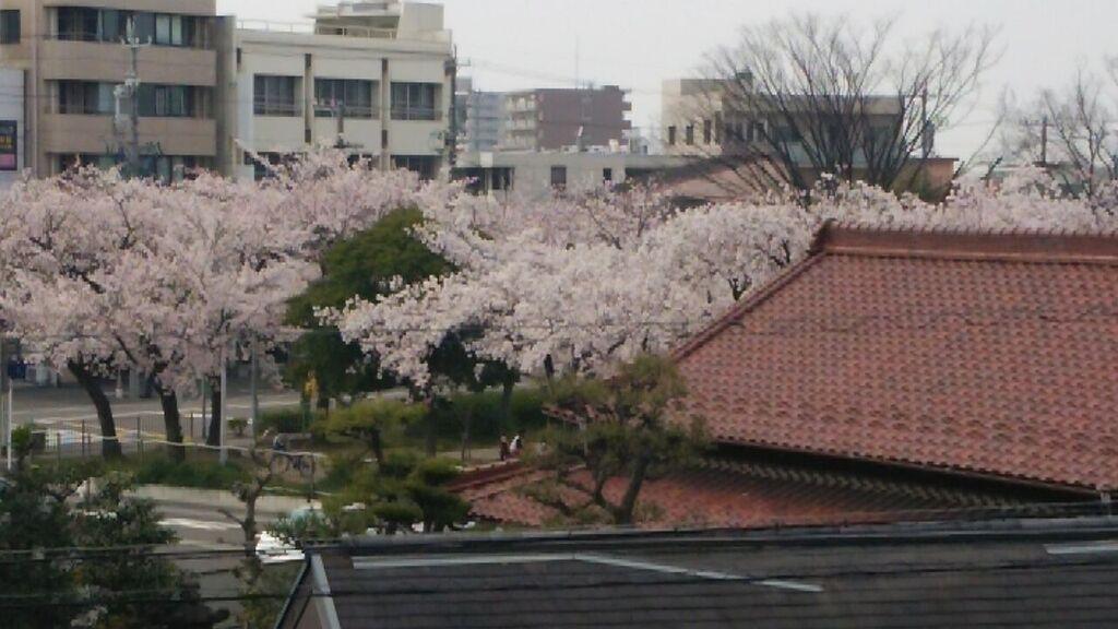 160402桜