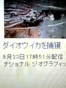ほ の た す ☆ ぶ ろ ぐ-090923_2029~01.JPG