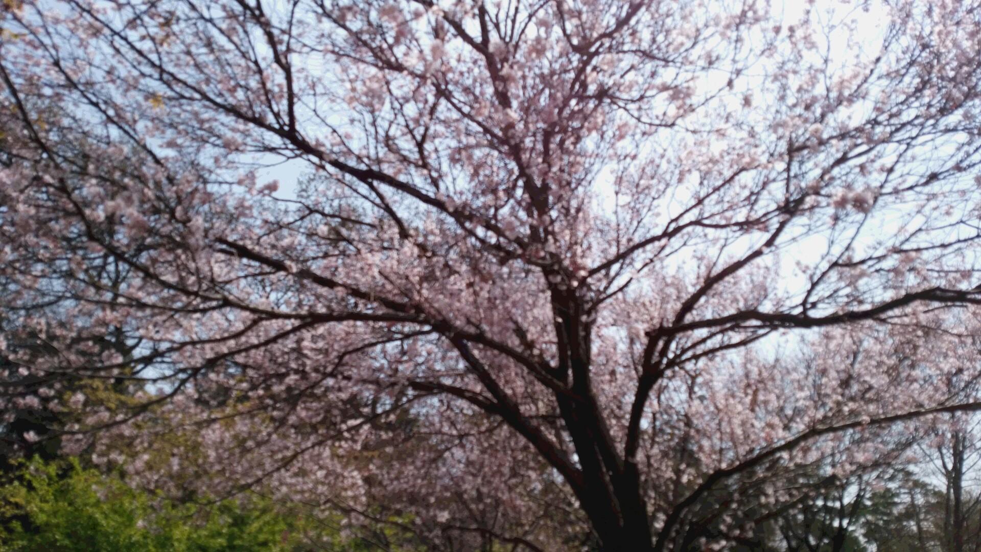 花見2016Ⅱ