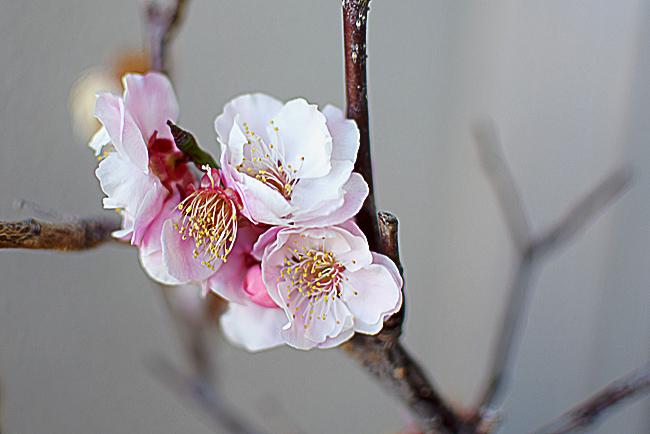 0001_santaki_ogose_DSC_0636.jpg