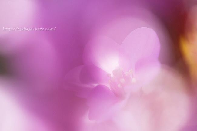 母の残した花
