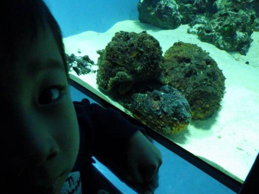 葛西臨海水族館 (14)