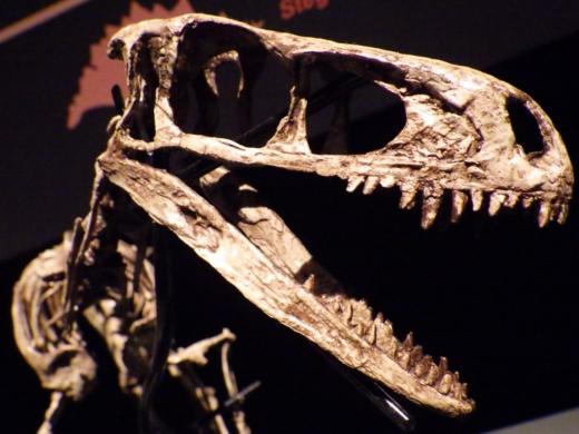 恐竜博2016 (8)