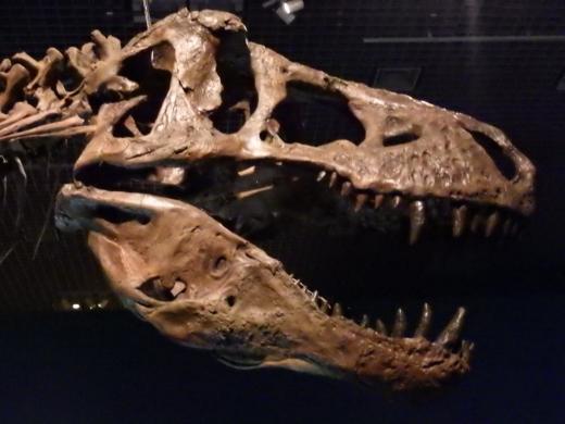 恐竜博2016 (10)