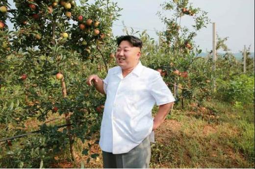 朝鮮リンゴ1