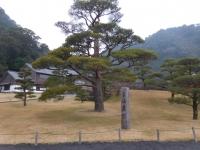 仙巌園の松160201