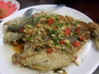 黃魚160311