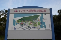 ヤマザクラ宮崎県総合運動公園160202