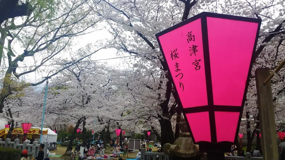 201604sakura2