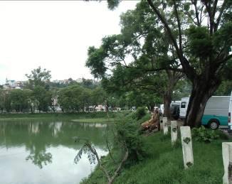 アンタナナリボ湖公園ジャカランダの木