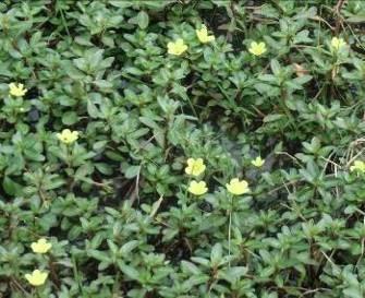 田園の花1
