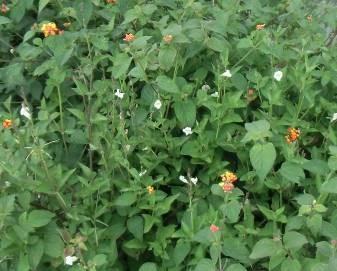 田園の花2