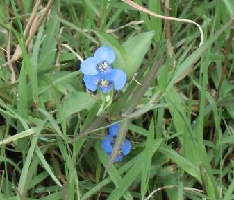 田園の花3