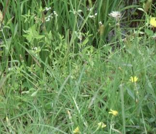 アンチラベの花3