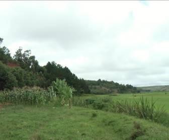 マダガスカルコーン畑