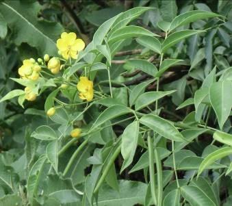 野の花3月3