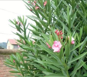 庭の花3月-3