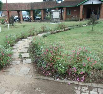 庭の花3月ホウセンカ