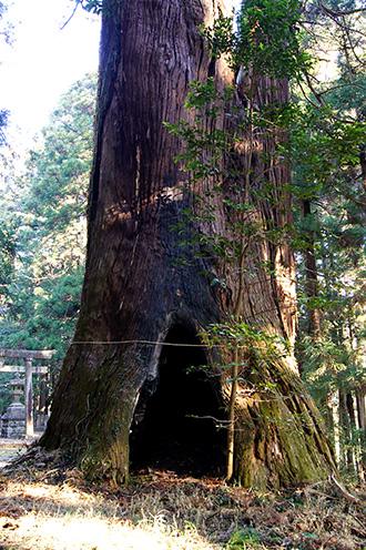 160107足利市日光神社の杉④
